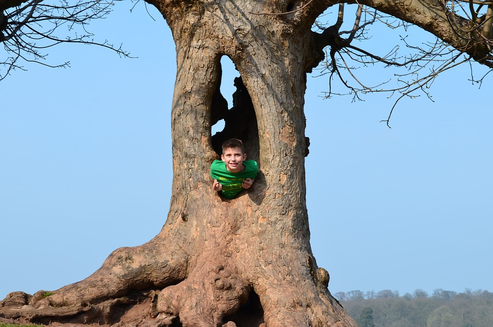Tree, Boy, Green T-shirt, Playing, Kedleston Hall