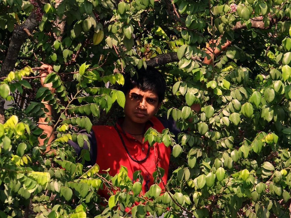 Boy On Tree, Picking Fruits, Tree, Starfruit, Climbing