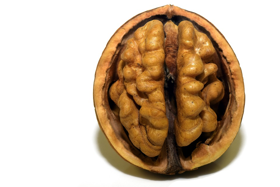 Walnut, Nut, Shell, Nutshell, Open, Brain, Head, Coils