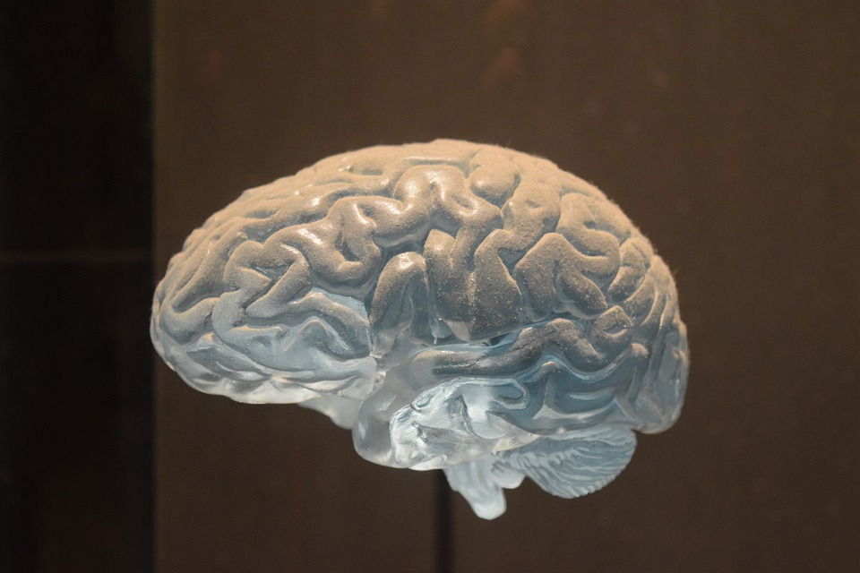 Brain, Reflection, Spirit, Grey Matter, New York
