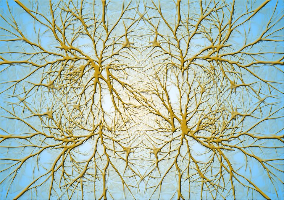 Neurons, Brain Cells, Brain Structure, Brain, Network