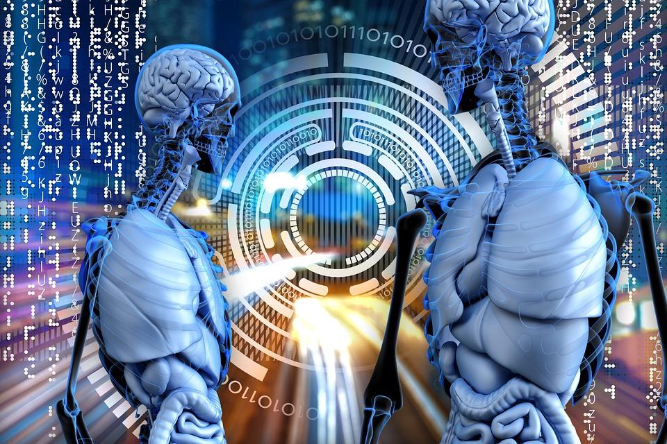 People, Brains, Organs, Skeletons, Computer, Network