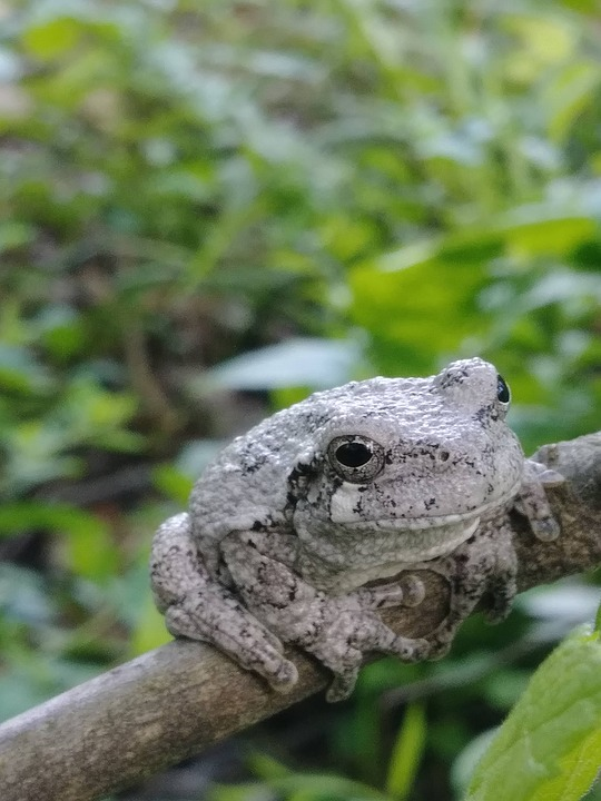 Frog, Tree Frog, Amphibian, Nature, Branch, Tree