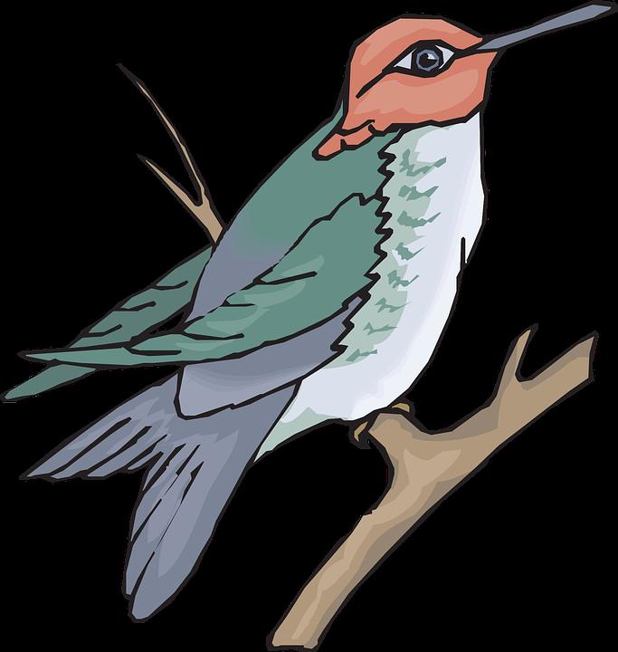 Bird, Branch, Wings, Hummingbird, Beak, Feathers