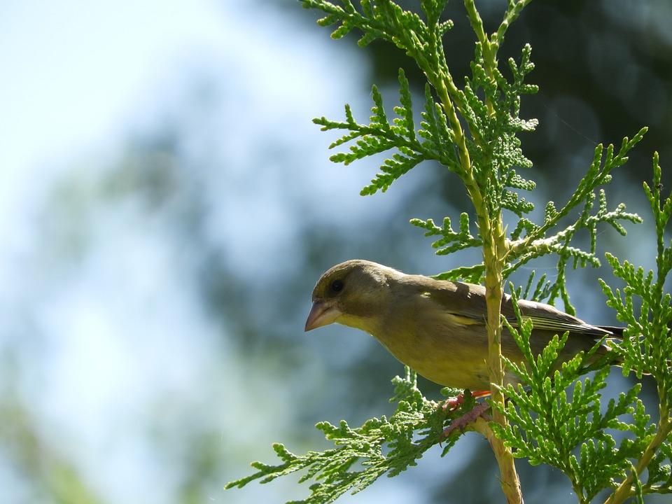 Bird, Branch, Nature, Plumage, Birds, Songbird