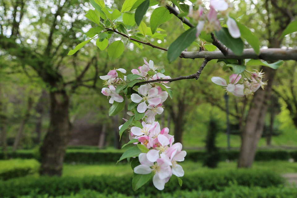 Tree, Nature, Flower, Plant, Blooming, Spring, Branch