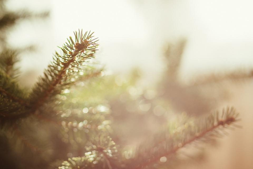 Nature, Background, Botanical, Branch, Bright, Bristly