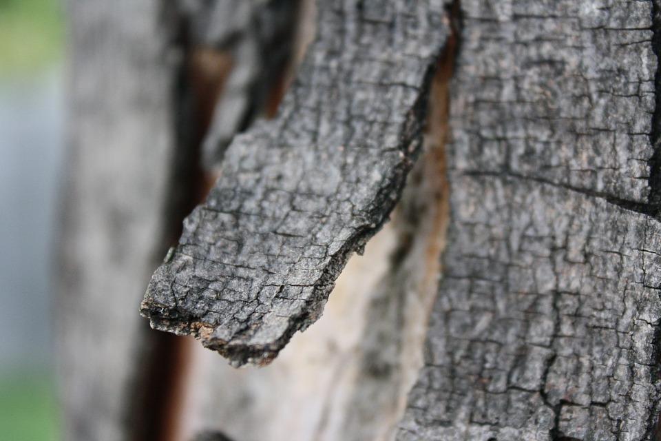 Bark, Tree, Branch, Fray, Stump, Wood, Broken, Rough