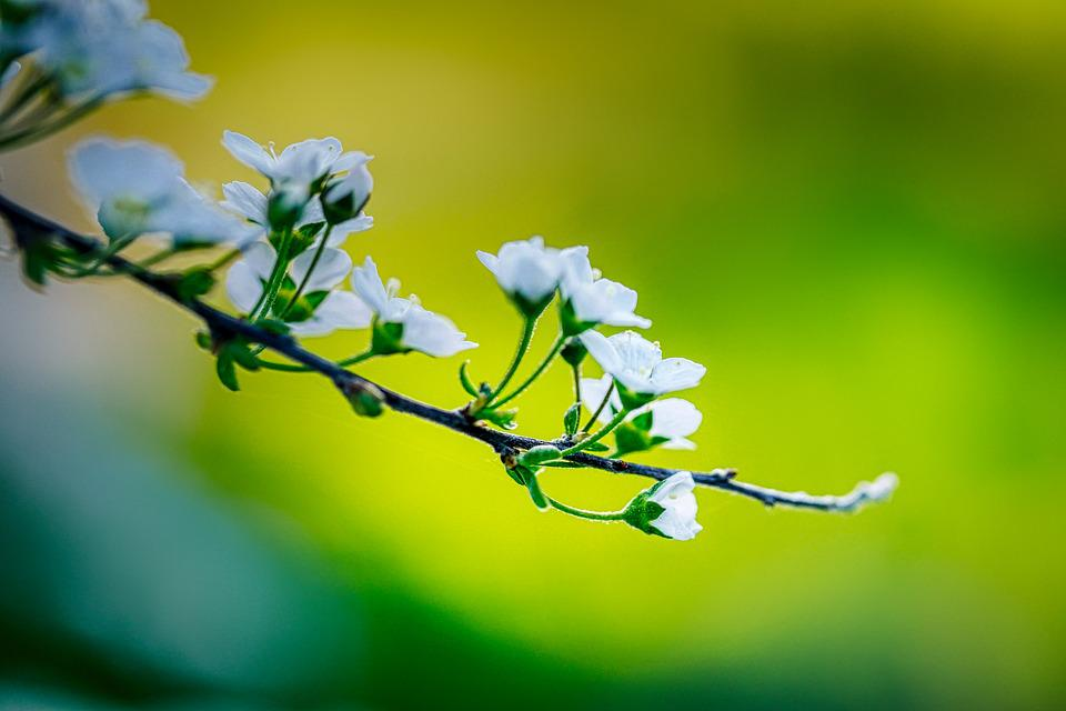 Bloom, Spring, Branch, Bush, Spring Flower