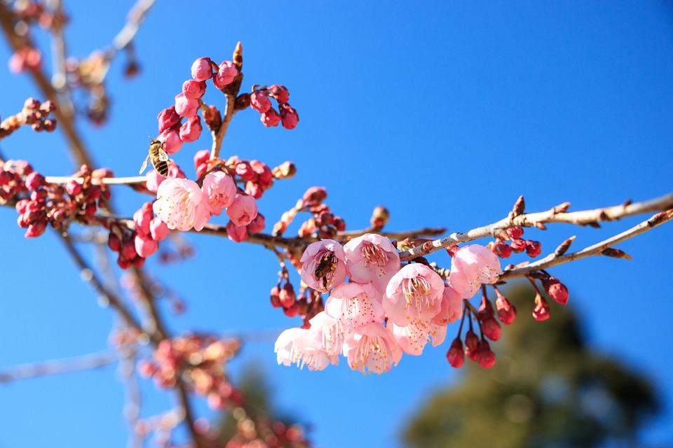 Branch, Tree, Season, Nature, Flower, Outdoor, Plant