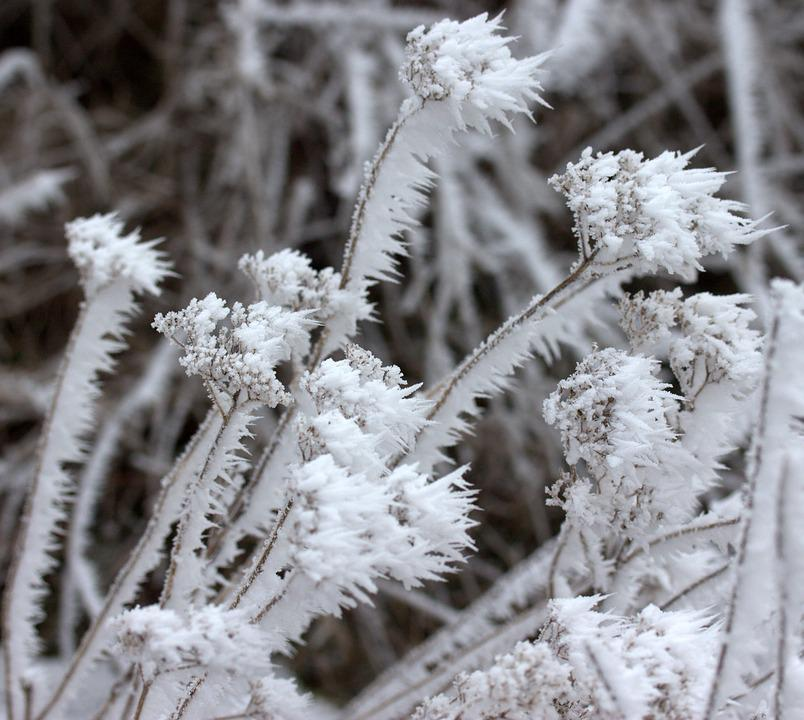 Branch, Frozen, Rime, White, Winter