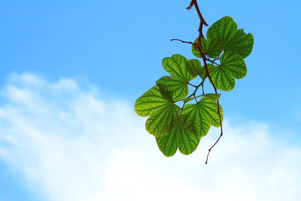 Leaves, Twig, Branch, Sky, Blue, Cloud, Green, Harmony