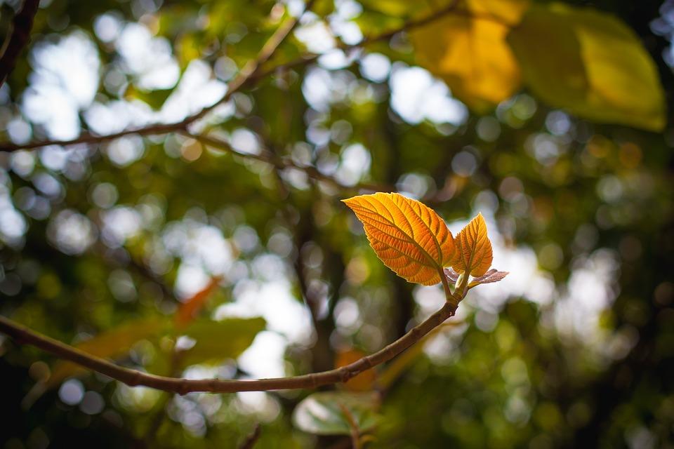 Tree, Leaf, Branch, Flora, Nature