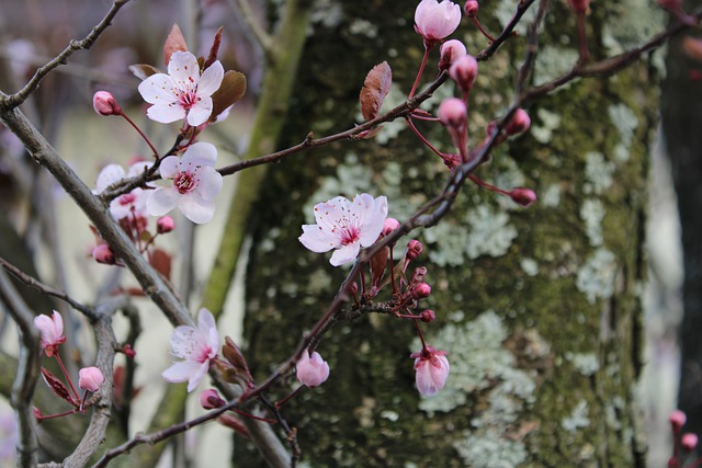 Nature, Branch, Flowers, Pink