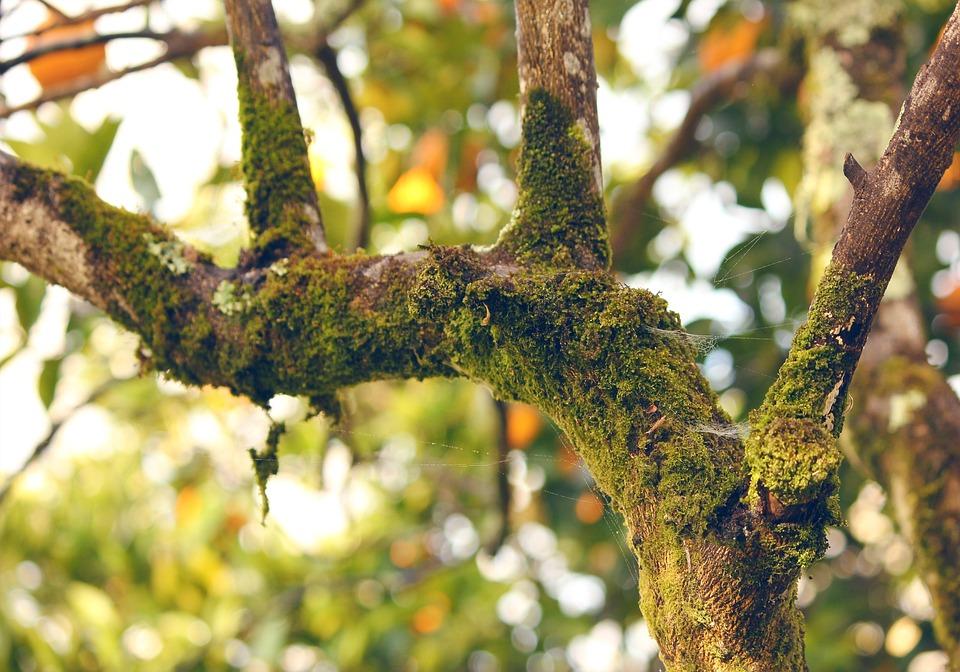 Moss, Orange Tree, Branch, Nature, Tree, Forest, Season