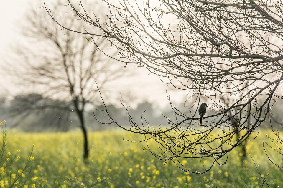 Lonely Bird, Bird, Nature, Sad, Sparrow, Branch