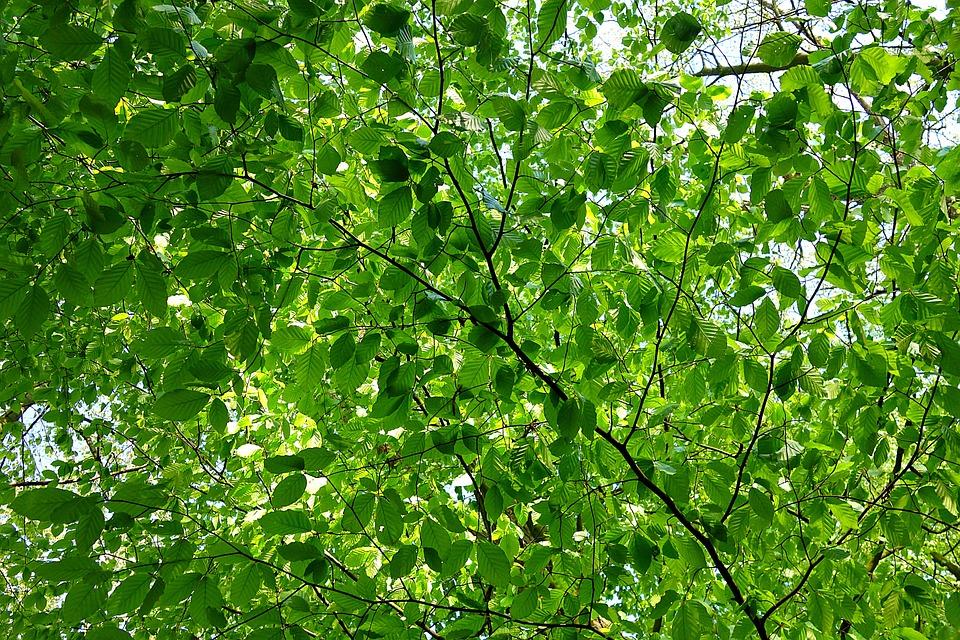Leaf, Foliage, Branch, Tree, Green, Texture, Pattern