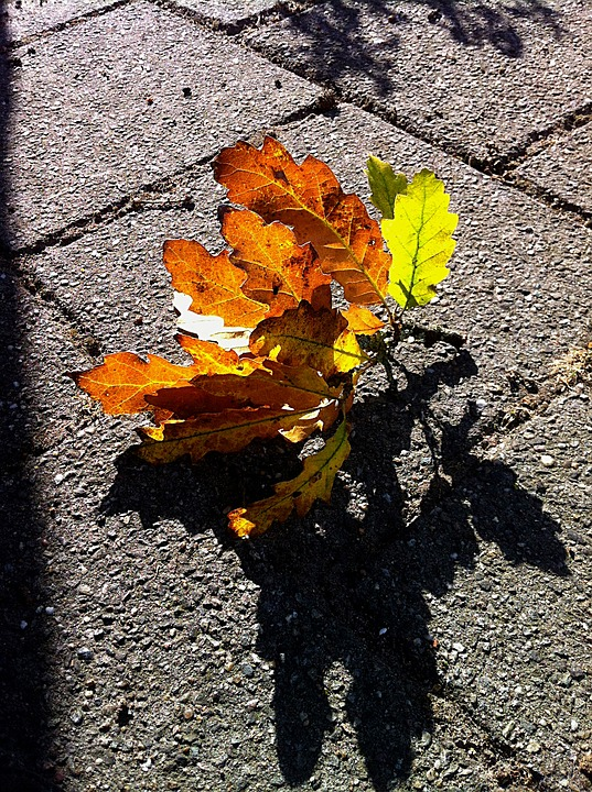 Autumn, Oak Leaf, Leaves, Branch, Colors, Season