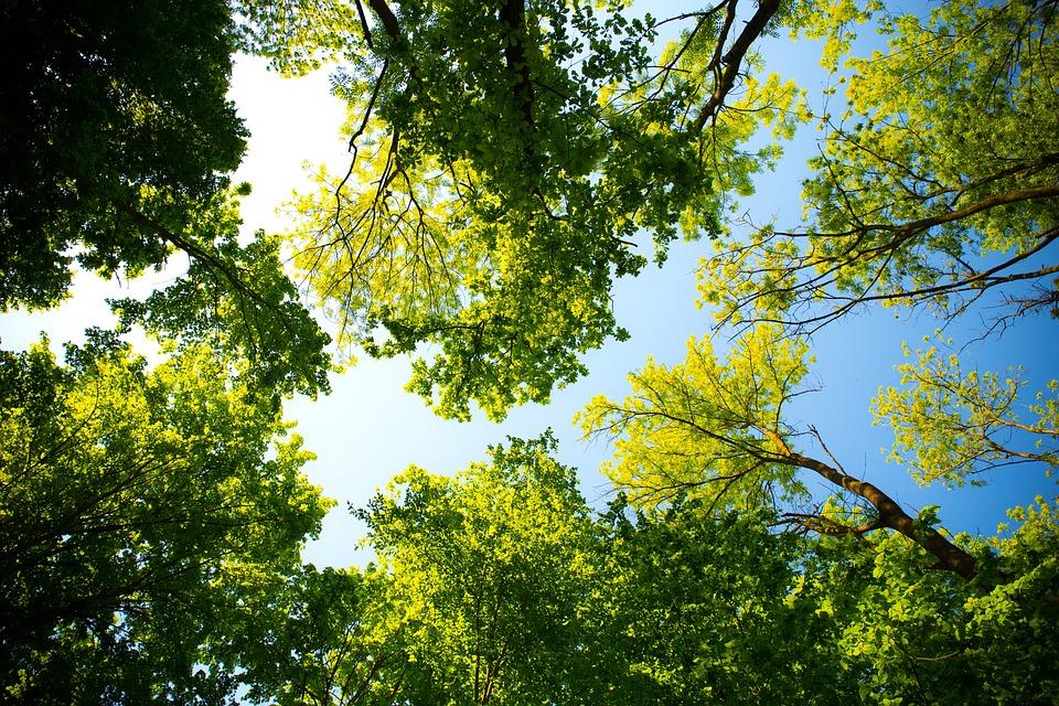 Tree, Nature, Branch, Leaf, Season, Wood, Landscape