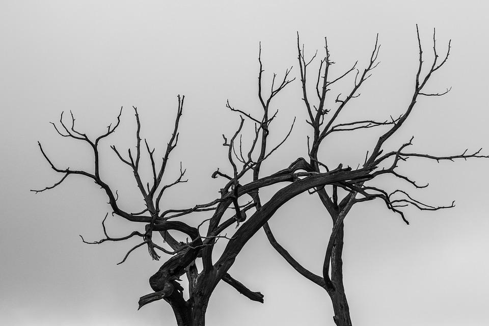 Tree, Branch, Silhouette, Fire