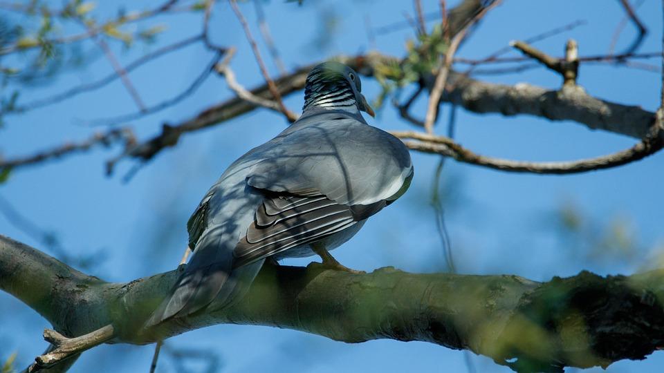 Dove, Branch, Bird, Animal World, Nature, Plumage, Sit
