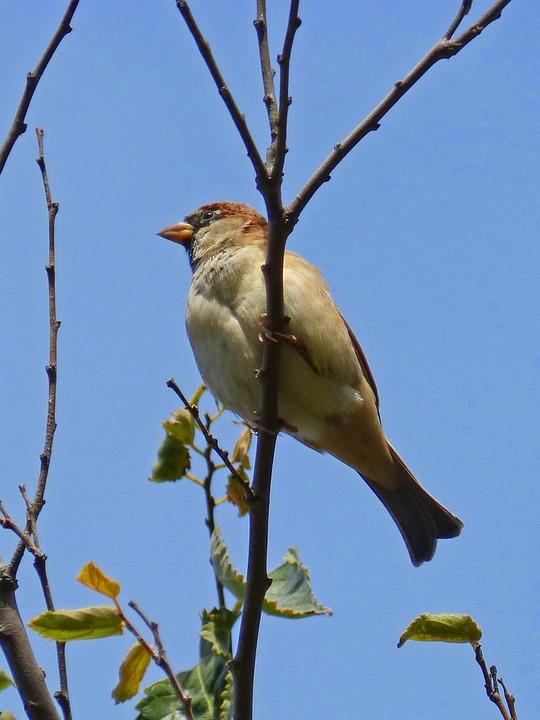 Sparrow, Branch, Sky, Autumn