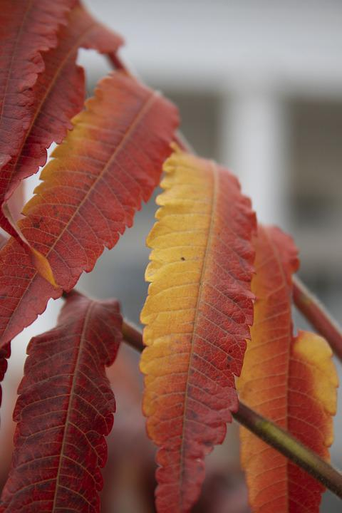 Leaves, Foliage, Branch, Tree, Autumn, Falling Leaves