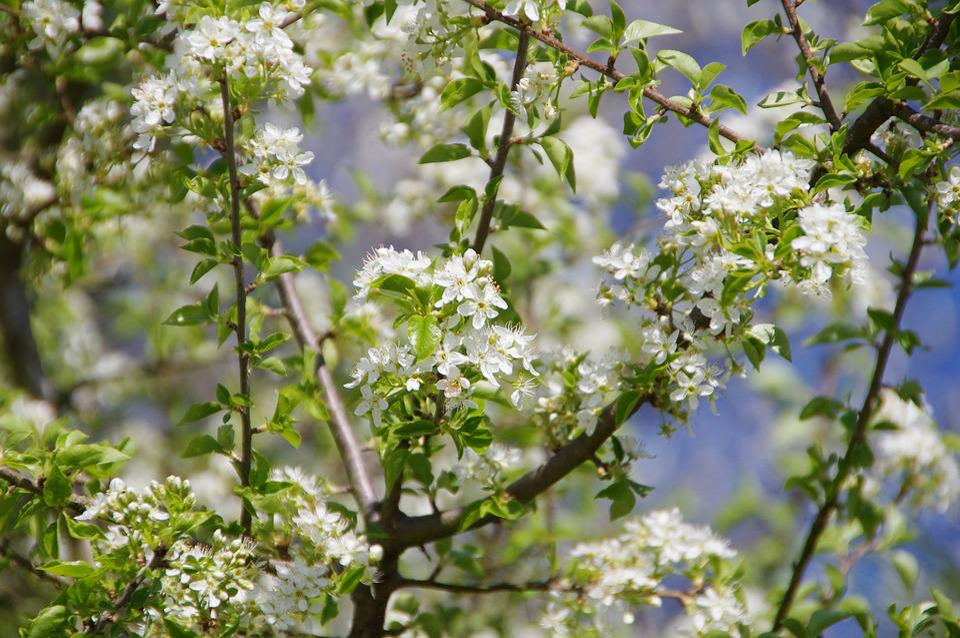 Flower, Tree, Branch, Nature