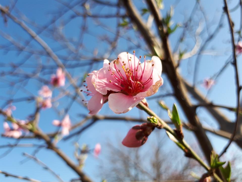 Tree, Branch, Nature, Flower, Plant, Season, Outdoors