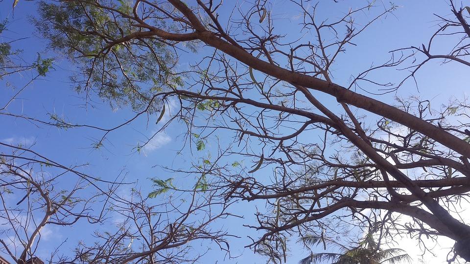 Tree, Branch, Nature, Wood, Sky, Sun, Fair Weather