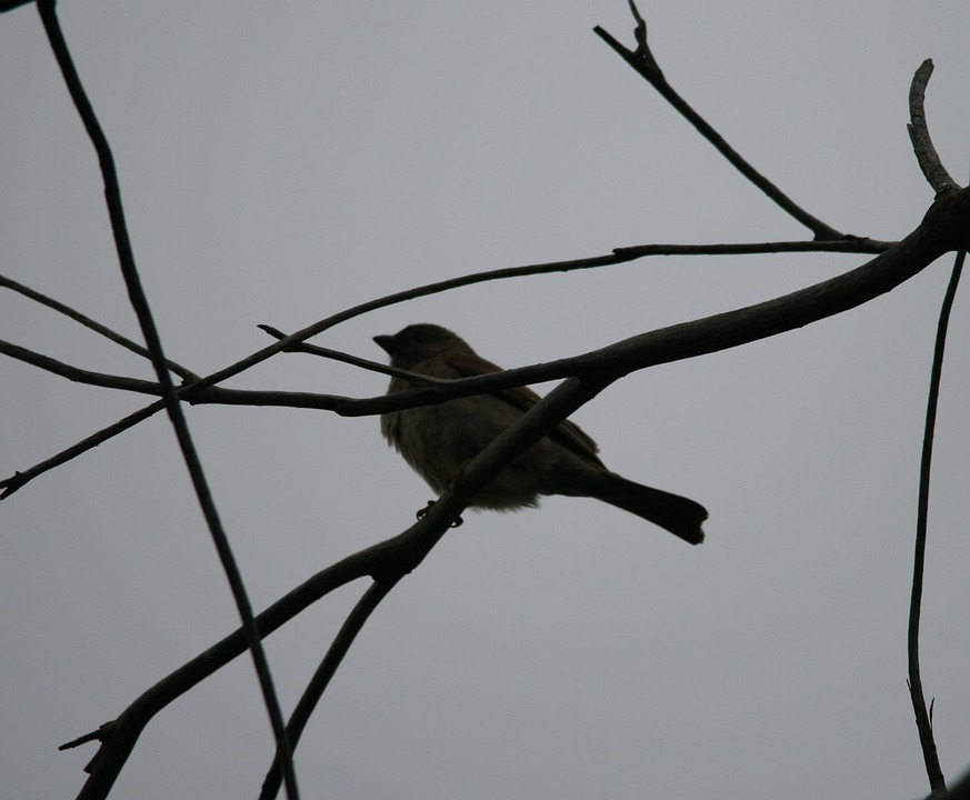Birds, Small, Single, Branch, Fly, Wings, Feather