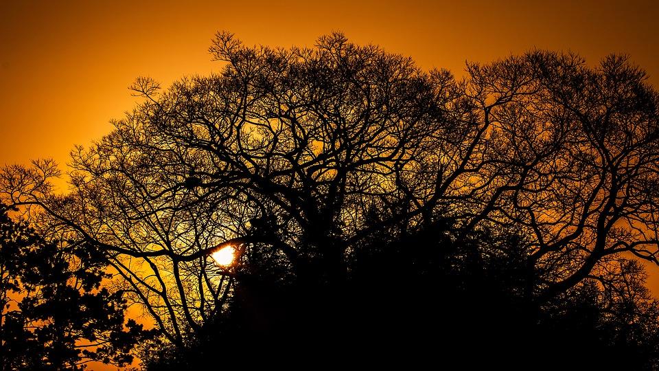 Tree, Fall, Dawn, Landscape, Nature, Branch, Wood, Leaf
