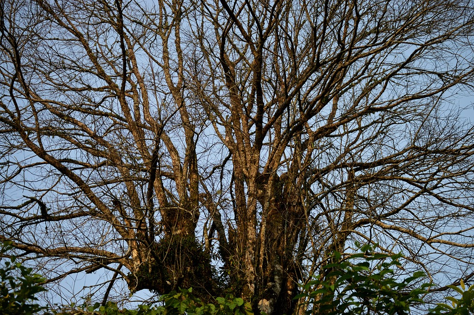 Tree, Wood, Nature, Background, Branch, Dry, Silhouette