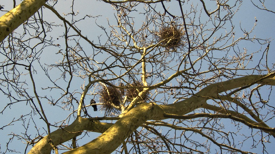 Aesthetic, Branches, Nest, Tree, Sky, Nature, Winter
