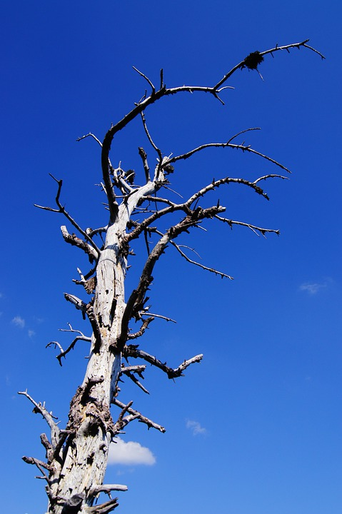 Gnarled, Tree, Arid, Branches