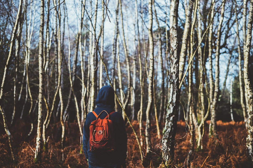 Back, Backpack, Hoodie, Trunks, Branches, Trees, Forest
