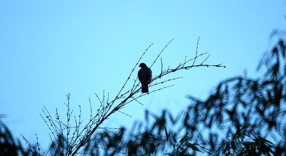 Bird, Branches, Perched, Silhouettes, Perched Bird