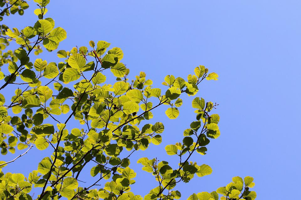 Spring, Green Leaves, Branches, Blue Sky, Bright, Light
