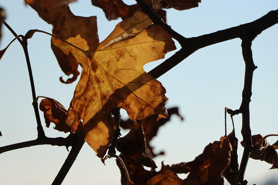 Autumn, Leaf, Leaves, Nature, Branches, Branch