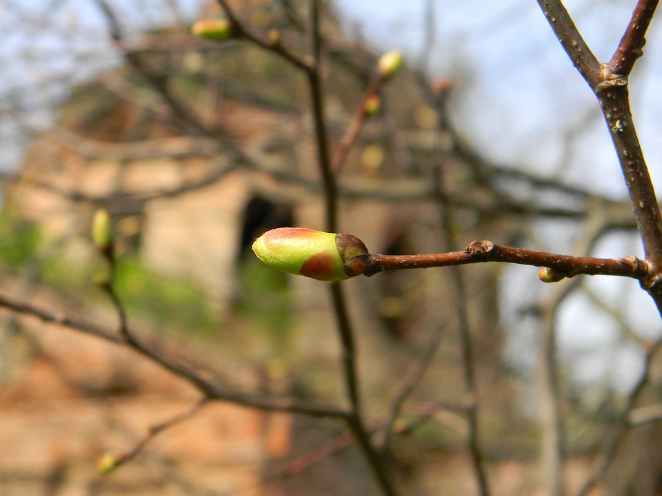 Spring, New Life, Bud, Seasons, Twigs, Branches, Tree