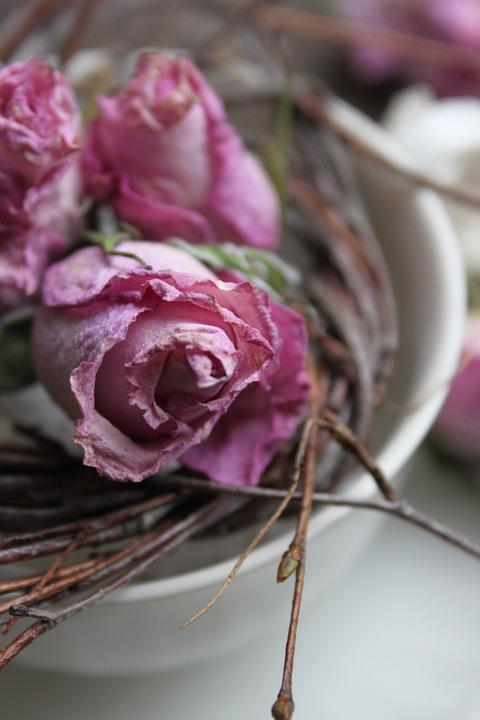 Pink Roses, Decoration, Dried, Cup Of, Branches