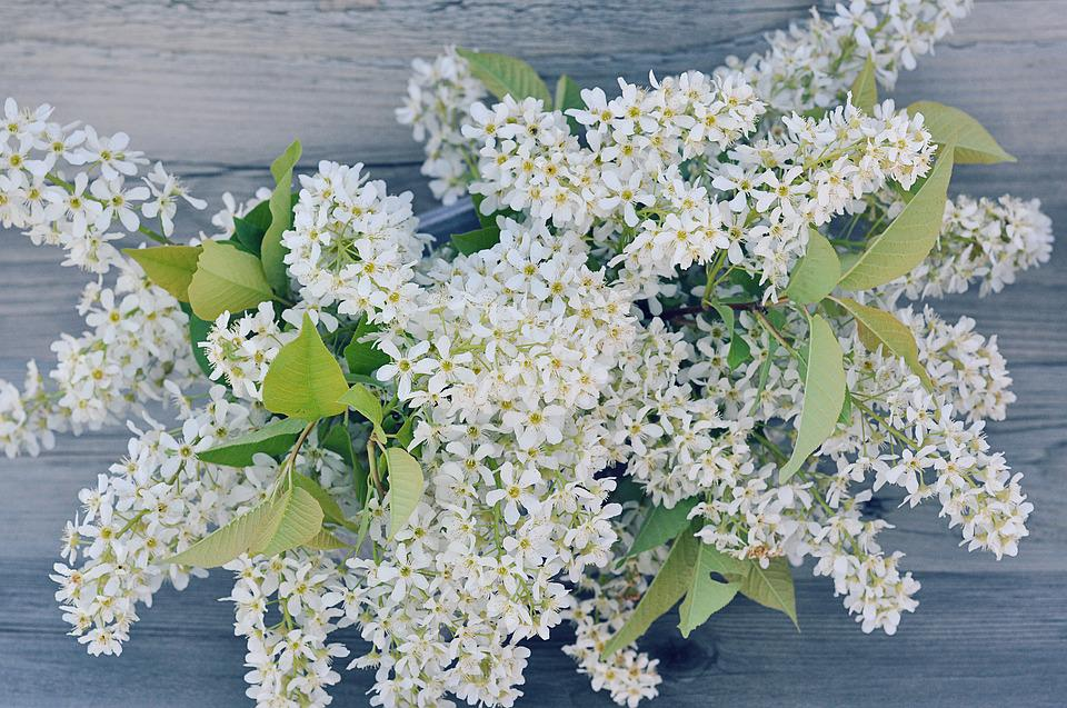 Lilac, Branches, Flowers, White, Lilac Blossom Branch