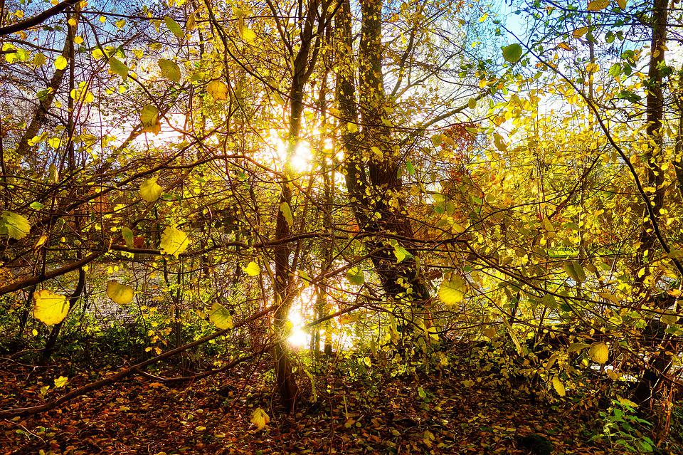 Trees, Forest, Branches, Foliage, Autumn Leaves