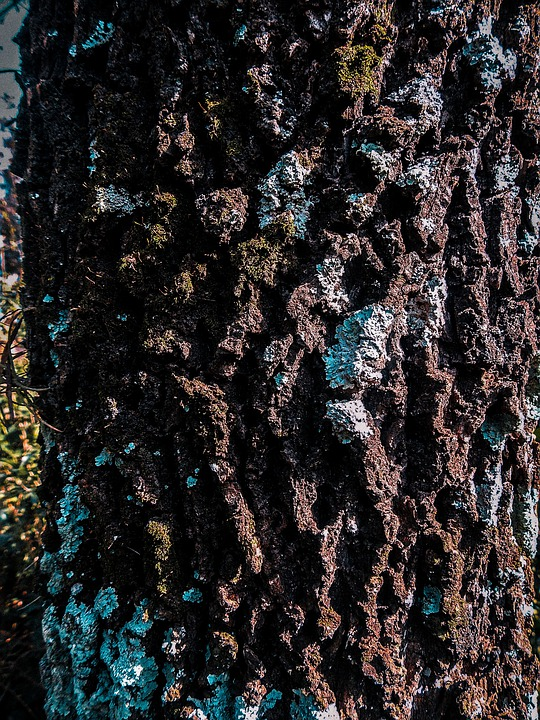 Trunk, Forest, Nature, Wood, Trees, Branches, Forests