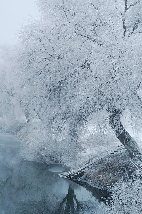White, Wood, Branches, Branch, Winter, Frost, Frosty