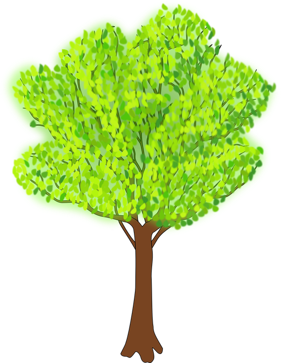 Tree, Branches, Greenery, Leaves, Summer