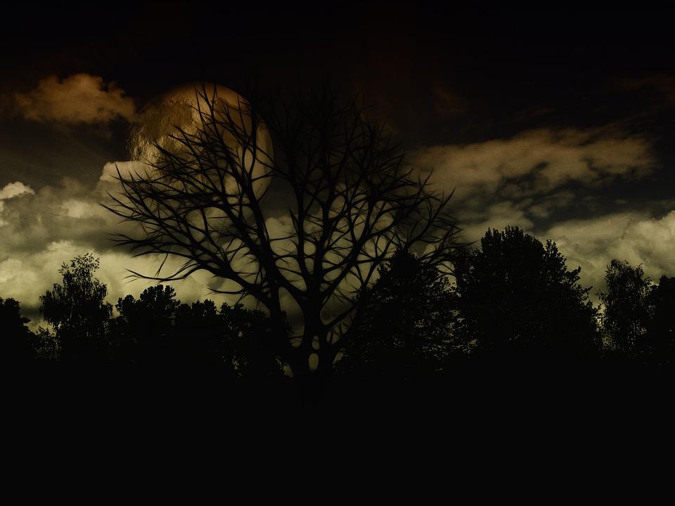Landscape, Night, Dark, Tree, Kahl, Aesthetic, Branches