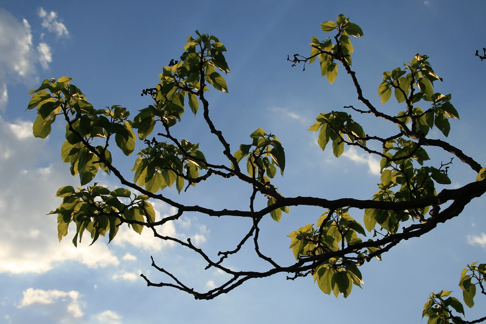 Branches, Curved, Foliage, Leaves, Clumped, Green, Sky