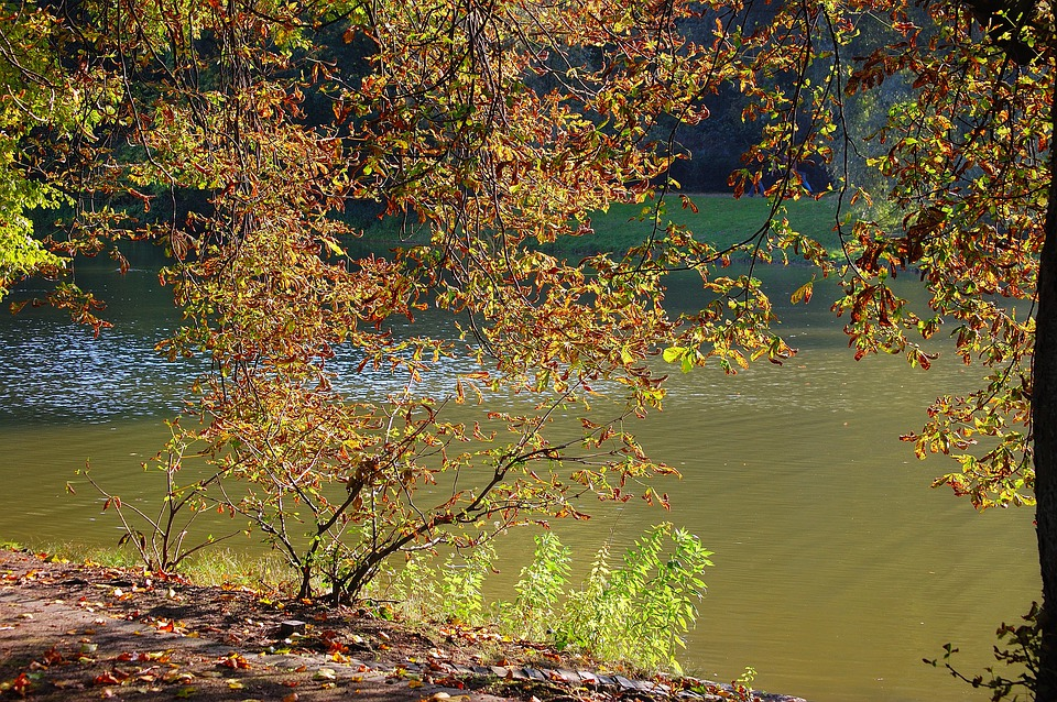 Autumn, Lake, Tree, Leaves, Nature, Sunny, Branches
