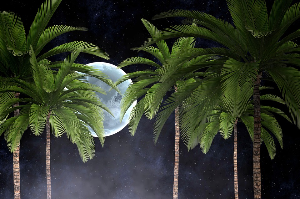 Moon, Trees, Palm, Branches, Trunk, Leaves, Smoke, Fog